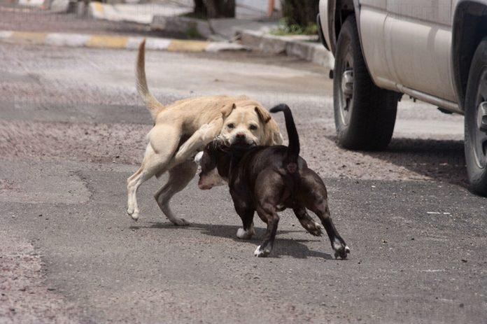 Perro Que Ladra No Muerde El Heraldo De Aguascalientes